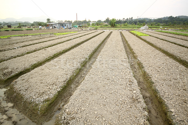 Cultivated land Stock photo © cozyta