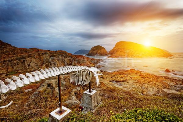 Baleia osso península ponto de referência céu nuvens Foto stock © cozyta