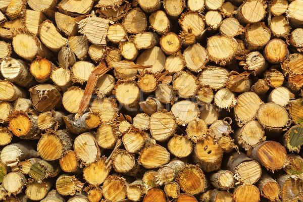природного аннотация фото древесины Сток-фото © cozyta