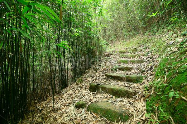 Groene bamboe bos pad weelderig boom Stockfoto © cozyta