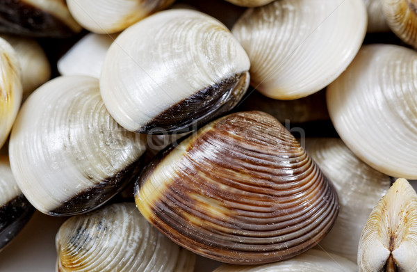 fresh clams Stock photo © cozyta
