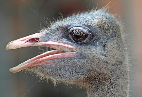 Tête nature oiseau crâne bouche Photo stock © cozyta