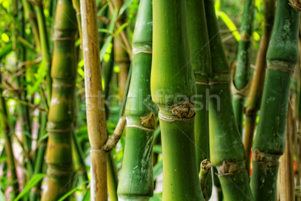bamboo close up as background Stock photo © cozyta
