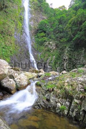 Сток-фото: воды · весны · лес · аннотация · лист · стекла