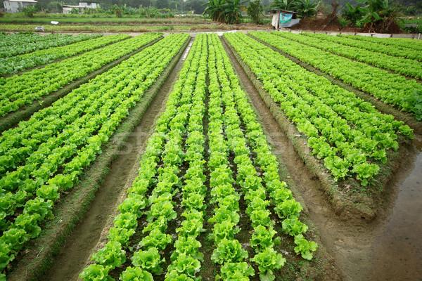 Megművelt föld ház étel fű természet Stock fotó © cozyta
