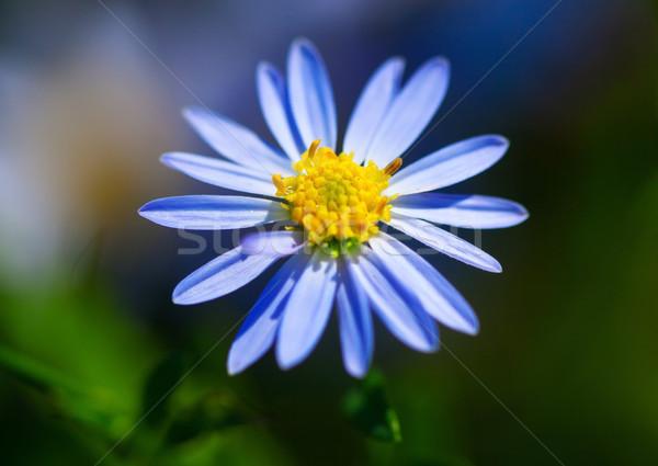 美しい 紫色 花 草原 顔 自然 ストックフォト © cozyta