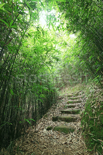 Green Bamboo Forest -- a path leads through a lush bamboo forest Stock photo © cozyta