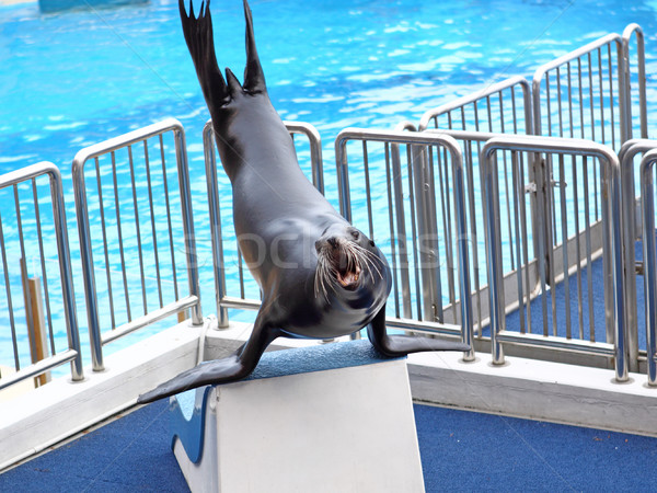 sea lion basking in the sun  Stock photo © cozyta