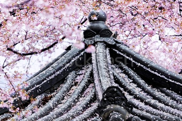 Weeping sakura infront of japanese temple Stock photo © cozyta