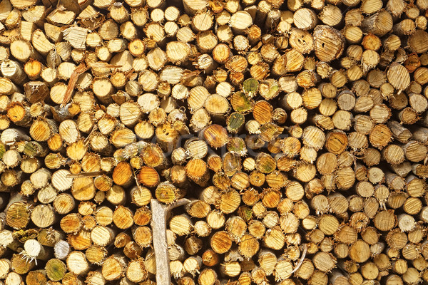 natural wooden logs  Stock photo © cozyta