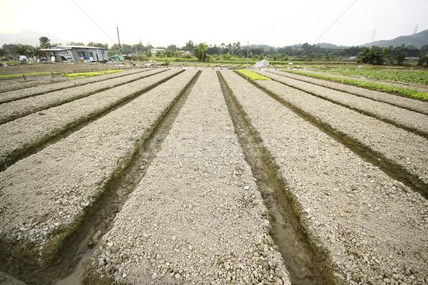 Cultivado terra casa comida grama natureza Foto stock © cozyta