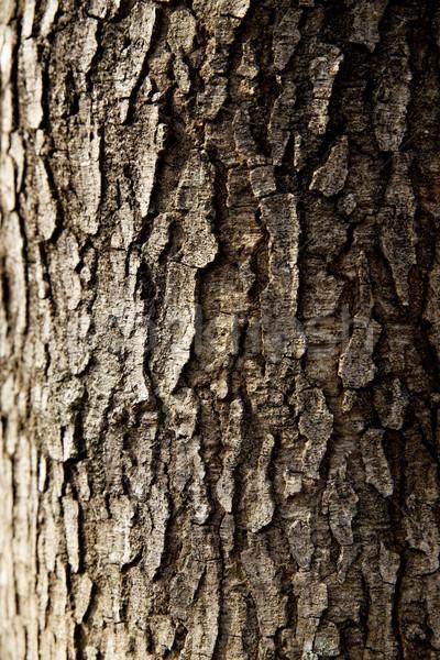 tree trunk closeup background wallpaper Stock photo © cozyta