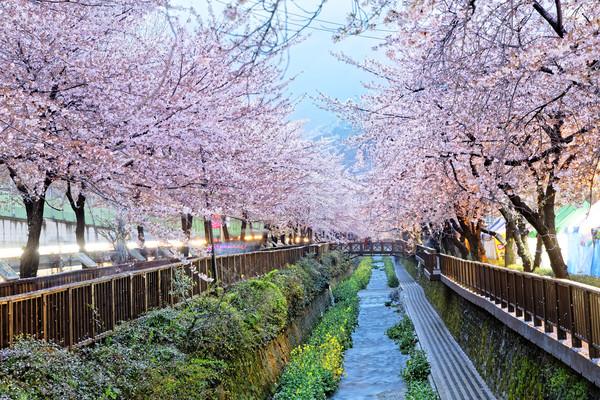 Cidade Coréia do Sul noite flor primavera Foto stock © cozyta