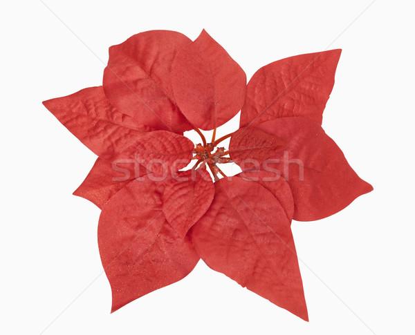 Piros karácsony növény vágási körvonal Stock fotó © CrackerClips