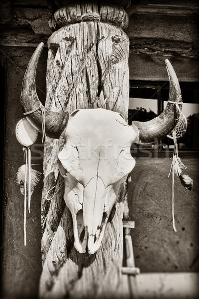 Cow skull Stock photo © CrackerClips