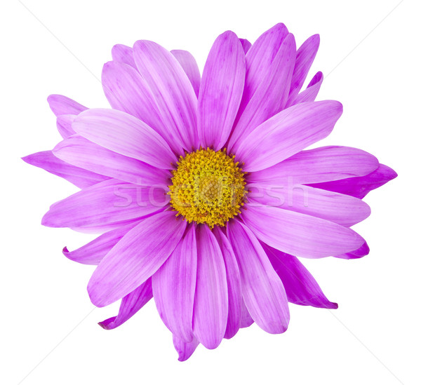 Purple Flower - Photo Object Stock photo © CrackerClips