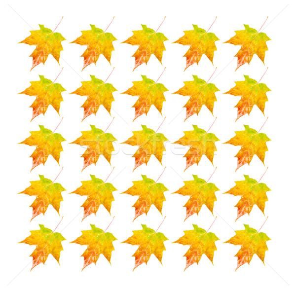 фото объект множественный осень Сток-фото © CrackerClips