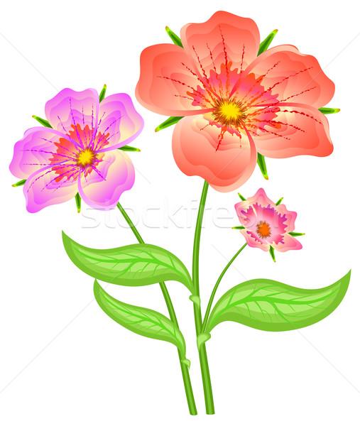 Primavera fiori rossi sottile piccolo bouquet rose Foto d'archivio © creatOR76