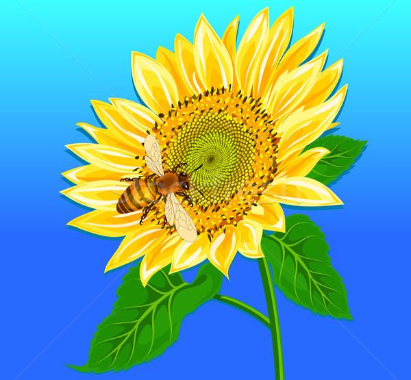 Sunflower Stock photo © creatOR76