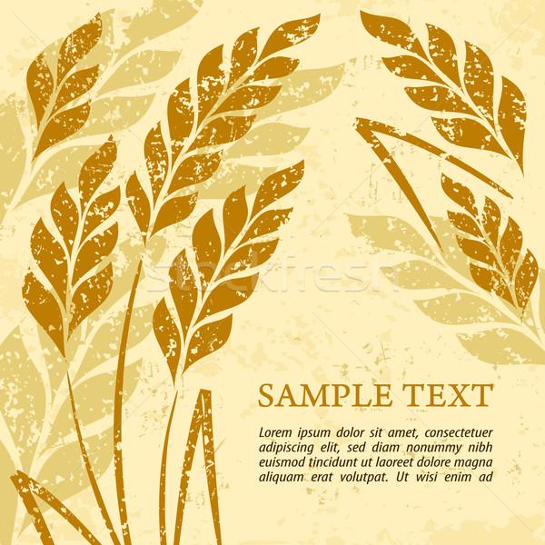 Ears of wheat background on grange Stock photo © creatOR76