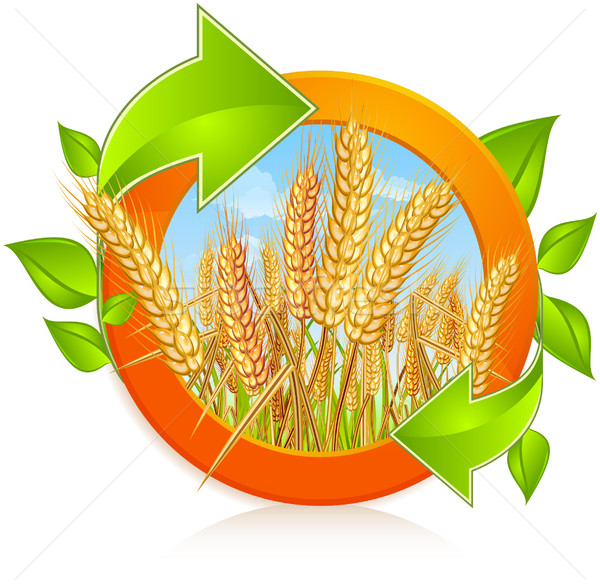 Stock photo: Circle with ripe wheat