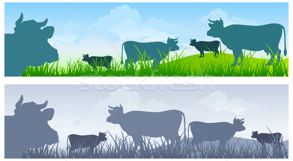 Cow on meadow  Stock photo © creatOR76