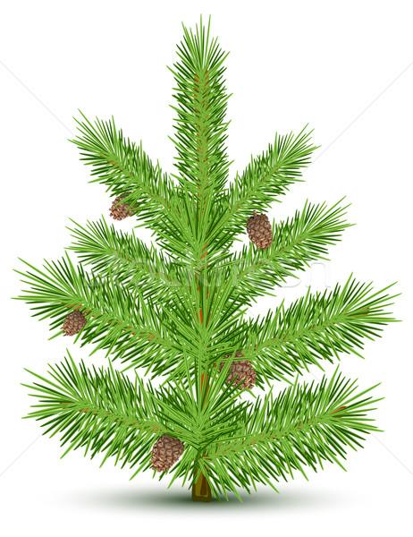 зеленый Рождества изолированный объект белый дерево Сток-фото © creatOR76