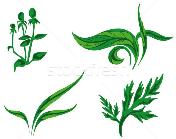 Kinds of plants Stock photo © creatOR76