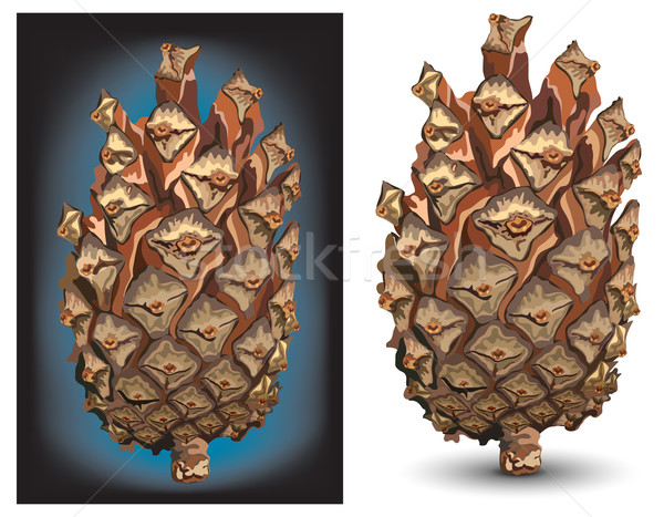 Pine cone  Stock photo © creatOR76
