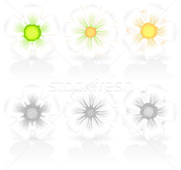 white flowers Stock photo © creatOR76