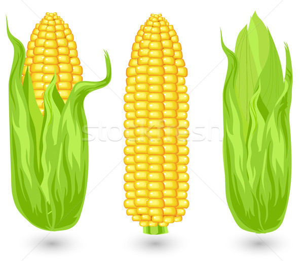 Zdjęcia stock: Kłosie · dojrzały · kukurydza · rolniczy · wole · ilustracja