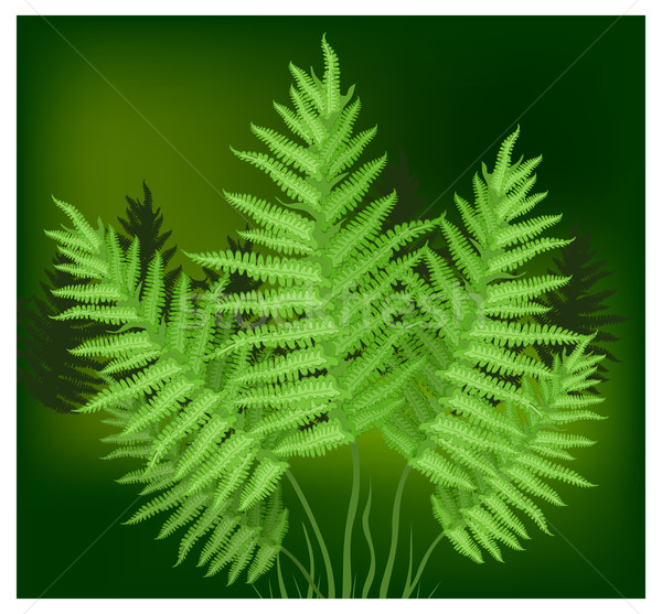 Varen plant familie groene gras bos Stockfoto © creatOR76
