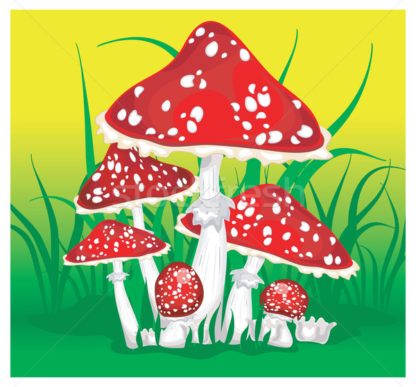 Fly agarics Stock photo © creatOR76