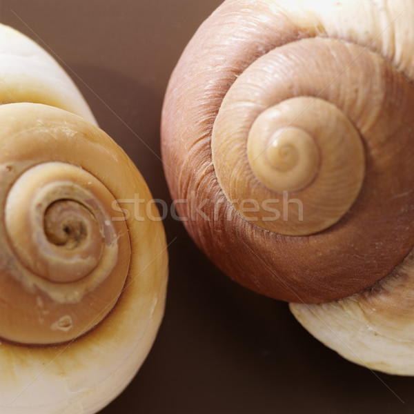 two brown shells Stock photo © crisp