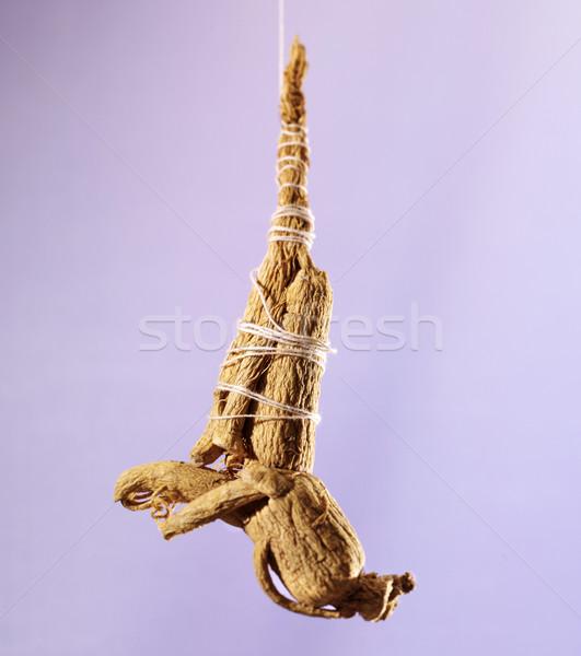 подвесной женьшень корень вверх Purple дерево Сток-фото © crisp