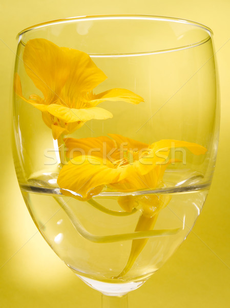 желтый цветок Nice желтый орхидеи цветок фоны Сток-фото © crisp