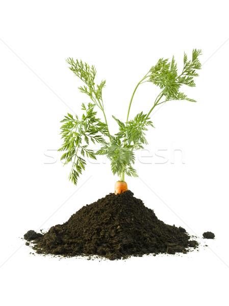 Havuç zemin büyüyen toprak arka plan Stok fotoğraf © crisp