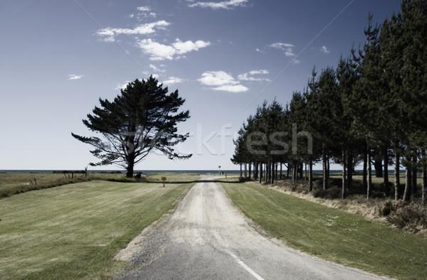 Güzel yaz gün yol çim balık Stok fotoğraf © crisp