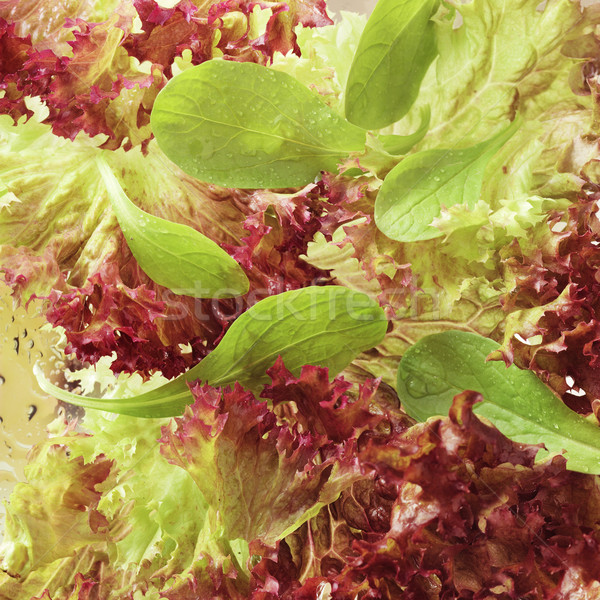 Lettuce close-up Stock photo © crisp