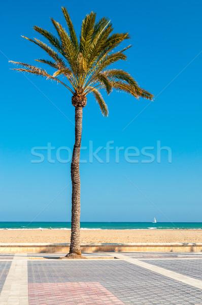 Tengerpart Valencia Spanyolország pálmafa LA víz Stock fotó © CsDeli