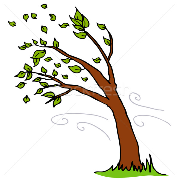 Wind Blowing Leaves Off Tree Stock photo © cteconsulting