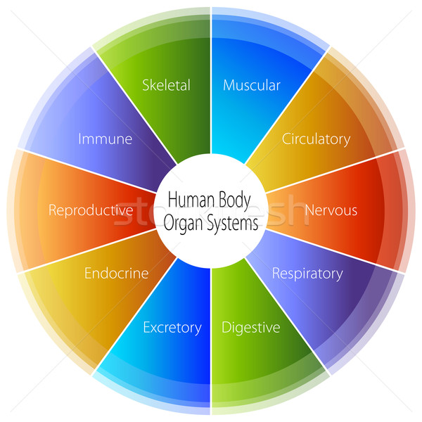 Human Body Organ Systems Chart Stock photo © cteconsulting