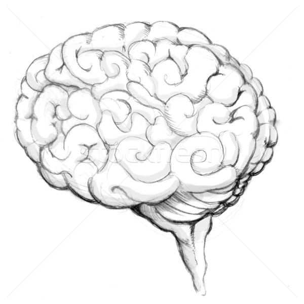 Human Brain Drawing Stock photo © cteconsulting