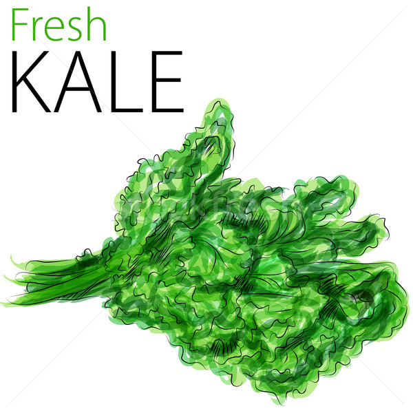 Fresh Kale Stock photo © cteconsulting