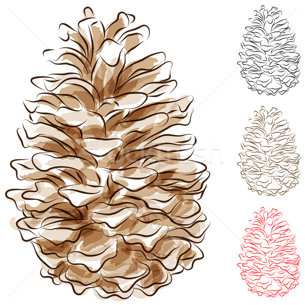 Watercolor Pine Cone Stock photo © cteconsulting