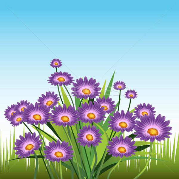 Lila százszorszépek kép levél kert művészet Stock fotó © cteconsulting