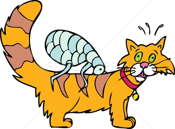 Cat has Fleas Stock photo © cteconsulting