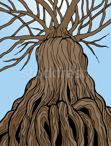 Ancient Tree Stock photo © cteconsulting