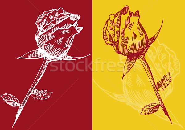 Hand Drawn Rose Stock photo © cteconsulting