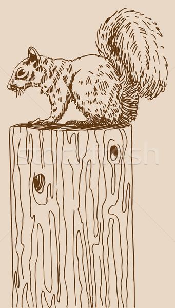 Sincap görüntü orman sanat beyaz grafik Stok fotoğraf © cteconsulting